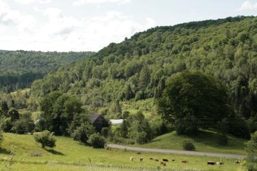 hills and herd